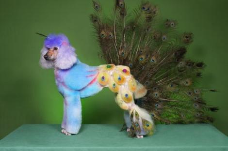 Nu înţelegem noi arta... Cele mai trăsnite frizuri ale animalelor întrec orice imaginaţie