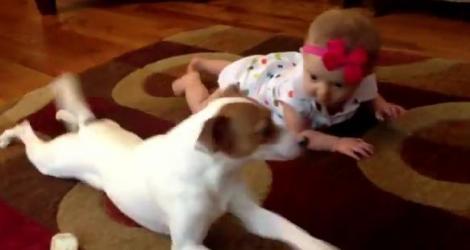 Video SAVUROS! Un câine învaţă o fetiţă să meargă