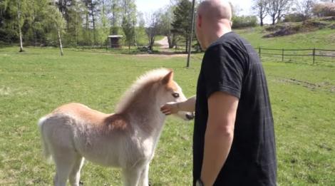 VIDEO: Un bărbat se laudă că VORBEŞTE pe limba cailor! Vezi cât de bine se înţelege cu animalele