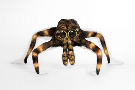 Uită-te bine! O iluzie optică demenţială! NU e un păianjen!