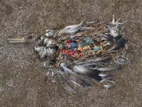 TREBUIE să știe toată lumea! De ce ne MOR păsările?