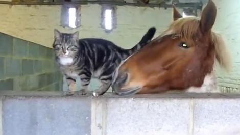 Nu o să-ţi vină să crezi cu cine s-a împrietenit o pisică! VIDEO