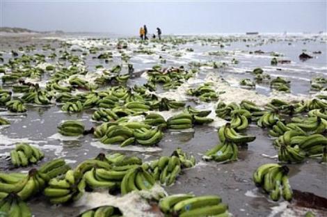 ULUITOR! Uite pe unde ZAC bananele, înainte să ajungă să fie cumpărate din piețe și supermarketuri!