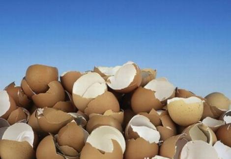 Nu le mai ARUNCA! Cojile de ouă sunt o MINUNE la casa omului