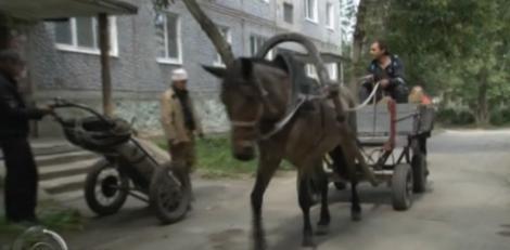 Un primar din Rusia a dat caii putere pe cai normali: Angajații săi merg cu căruța prin oraș!