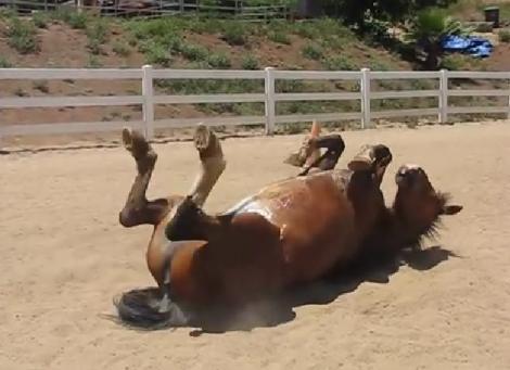 """VIDEO: Cum îi """"oftează"""" corpul unui cal! E cea mai lungă explozie de GAZE pe care ai auzit-o vreodată"""