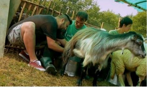 De la Capitală, la stână! Spectacol total cu vedete la muls de capre