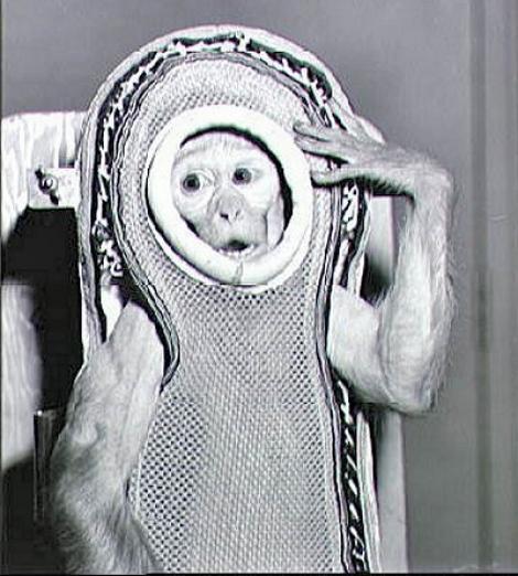 4 decembrie 1959. NASA trimite în Cosmos un macac. Maimuța Sam ia primul contact cu spațiul