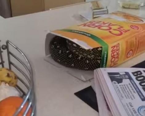 """""""Am crezut că fac infarct!"""" Uite ce a găsit acest tânăr în cutia cu cereale! Putea să fie MORTAL!"""