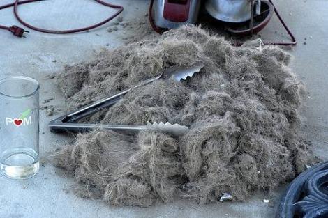 A folosit părul câinelui în cel mai BIZAR mod posibil! Uite ce a făcut acest bărbat! O să rămâi fără cuvinte!
