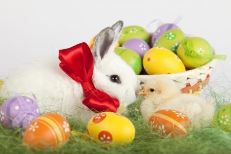 Idei geniale: Decoraţiuni de Paşte pe care le faci în 10 minute! Rezultatul e uimitor