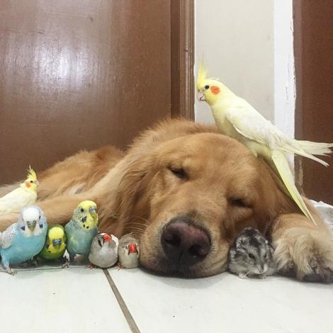 Prietenie inedită dintre un câine, un hamster și mai mulți papagali. Galerie FOTO adorabilă