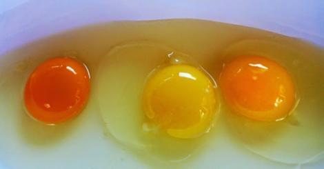 Cum îți dai seama dacă ouăle provin de la găini bolnave! Tu știi care este gălbenușul bun?