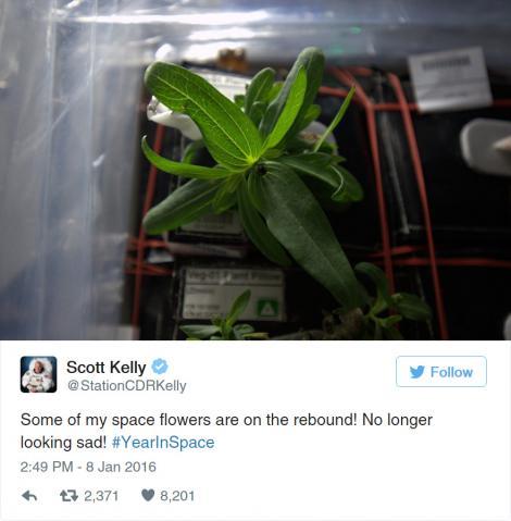 Anunțul uimitor făcut de NASA: A înflorit prima floare în spațiu! Iată cum arată