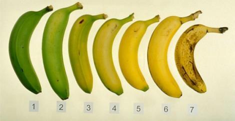 Cercetătorii au descoperit secretul! Bananele trebuie consumate în funcție de organismul fiecăruia! Află care ți se potrivește