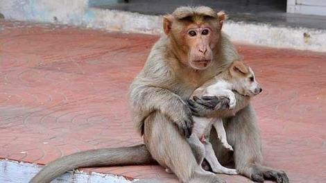 Privește imaginile, te vor înduioșa! Ce face o maimuță pentru un cățel abandonat
