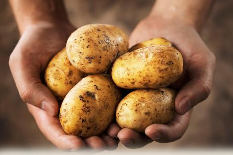 Şi tu faci greşeala asta! Ţii cartofi în frigider? Uite ce trebuie NEAPARAT să ştii!