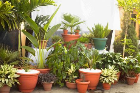 Ai plante de apartament și vrei să le faci să arate demențial? Iată cel mai simplu truc! Vecinii te vor invidia!