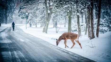 Meteorologii nu mai au niciun dubiu: Gata, vine iarna! V-ați pregătit fularele?