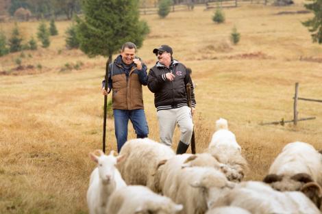 """De râs cu lacrimi! """"Ferească Dumnezeu! Nea Mărin m-a pus să mulg oile. Și să le strâng căcărezele!""""Romică Țociu a avut parte de peripeții la """"Poftiți la muncă"""""""