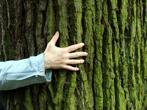 Psihologia lemnului. O nouă abordare demonstrează cum te poți vindeca de boli  în propria casă