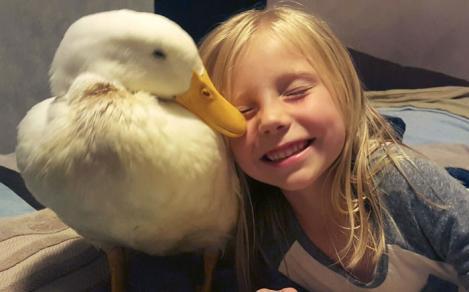 Prietenie neobișnuită! Cum poate o rață să țină locul unui animal de companie: Imagini adorabile din povestea lor!