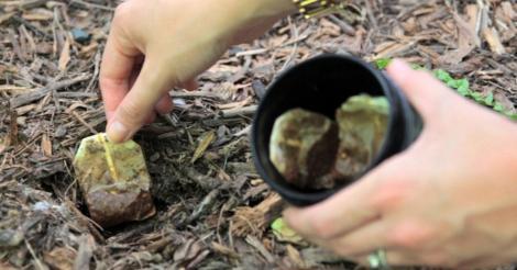 Ce se întâmplă dacă bagi în pământ pliculețe folosite de ceai! Nu te-ai fi gândit la asta!
