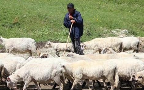 Sprijin financiar pentru crescătorii de animale din România. 32 de milioane de lei într-un singur an!