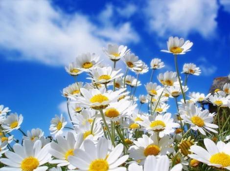 Am avut soare, ploi, vânt... Ce urmează, oare? Cum va fi vremea de Florii