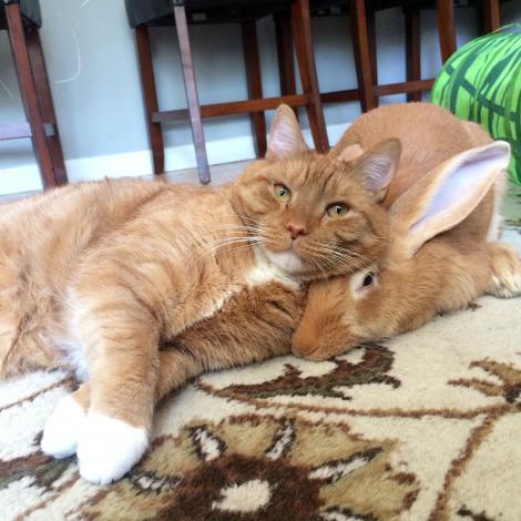 Prietenia dintre o pisică şi un iepure care îţi va topi inima! Se înțeleg din priviri!