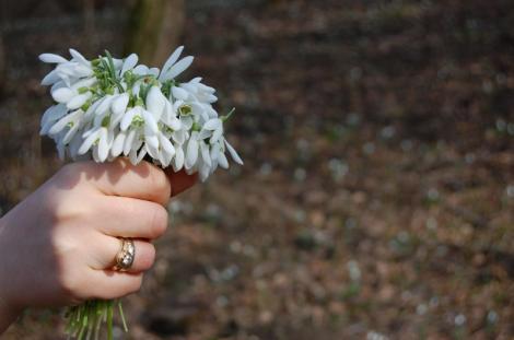 """Înfloresc grădinile, ceru-i ca oglinda"". Gata, a venit primăvara! Cum va fi vremea"