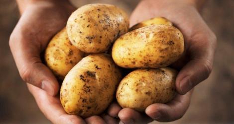 """Petele de pe cartofi, adevărate """"bombe cu ceas"""" pentru organismul omului!"""