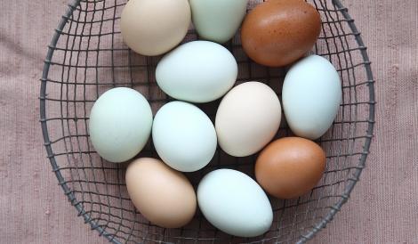 Tu pe care le alegi din supermarket? Nutriționiștii fac lumină: de ce unele ouă sunt albe și altele rozii sau maro