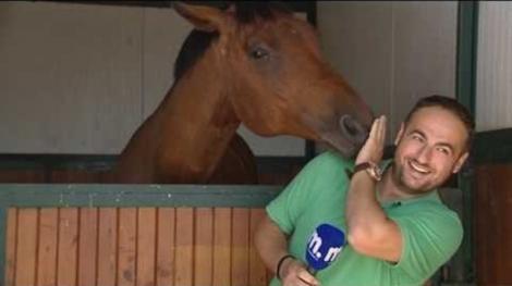 Un cal a făcut zile fripte unui reporter, în direct! Animalul avea neapărat ceva de zis la microfon! Râzi cu lacrimi! (VIDEO)