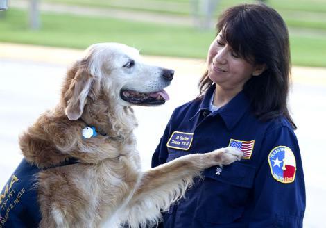 Imagini de-o emoție aparte! A căutat timp de zece zile sub dărâmături. Ultimul câine salvator din 11 septembrie 2001, rămas în viață, și-a găsit sfârșitul sub salutul de onoare al pompierilor