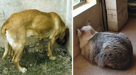 Animalul tău de companie stă așa? Atunci mergi urgent cu el la veterinar, s-ar putea să fie grav bolnav!