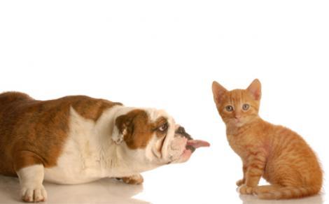 Mori de râs! Ce ghidușii fac câinii pentru a le tachina pe pisici! (VIDEO)