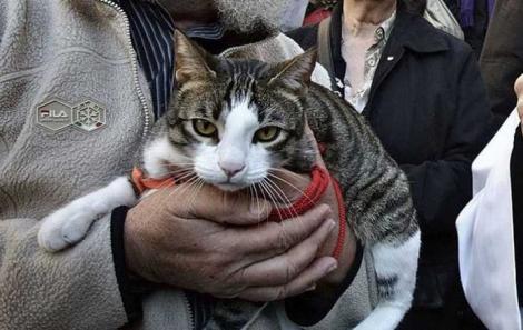 Înfuriată că slujba religioasă durează prea mult, o pisică a atacat preotul