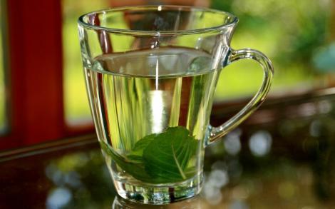 Fie iarna cât de grea, eu am cu ce mă trata! Ceaiul de busuioc, despre care fenicienii spuneau că e o LICOARE MAGICĂ, vindecă răceala!