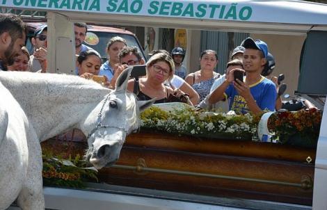 Dacă nu-ți curge o lacrimă, înseamnă că n-ai suflet! Sereno, armăsarul care a jelit la moartea stăpânului!