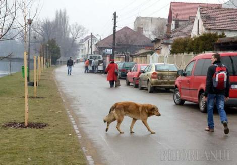 Amendă de 2.500 de lei pentru un gest pe care îl faci şi tu pe stradă. Legea care îi va arde la portofel pe români