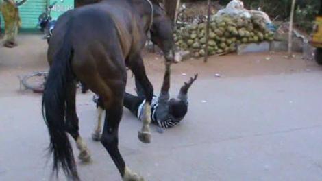 Șocant! Și-a bătut calul, iar acesta s-a răzbunat! Un bărbat din Botoșani a fost călcat și mușcat de animalul pe care l-a lovit