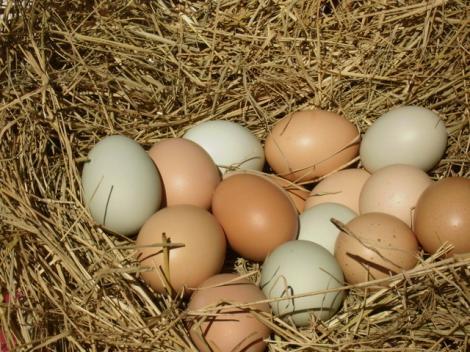 Lumea științei a fost pusă pe jar de o descoperire uluitoare! Ce s-a găsit în interiorul unor ouă de găină