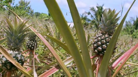 Treci pe lângă ele fără să le recunoști! Unde găsești arahidele și cum arată fructele în care găsești semințe de susan!