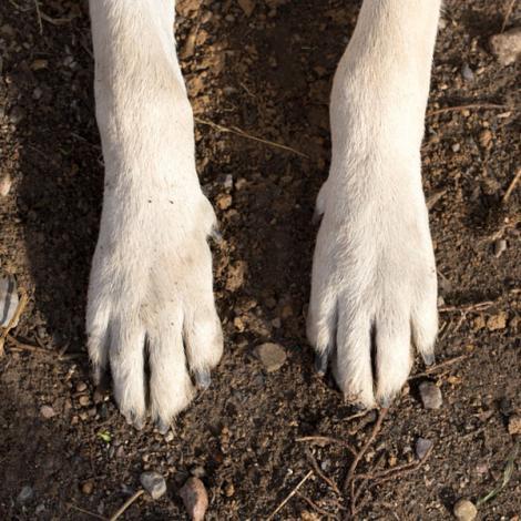 Un maidanez pune la cale cea mai tare farsă! Cine ar fi crezut că un câine face așa ceva?