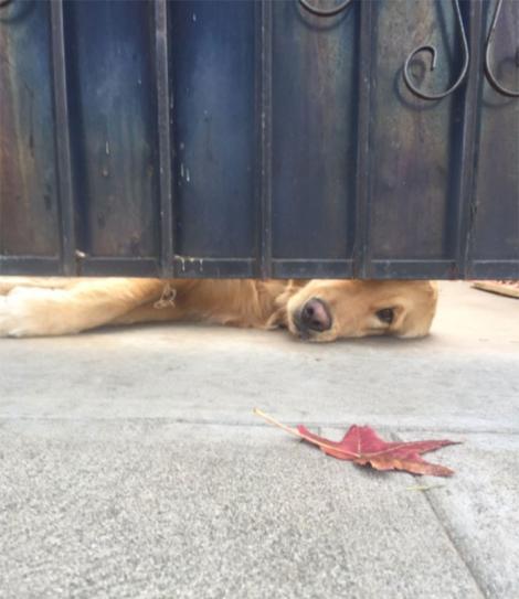 Eleva pleca la școală când a văzut cum câinele îi face semne! Patrupedul avea să îi facă o surpriză de zile mari!