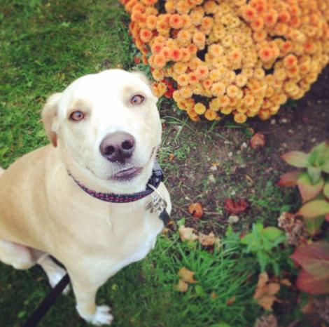 Lana, cea mai tristă cățelușă din lume, a fost abandonată din nou. Urmează să fie eutanasiată, dacă nu i se găsește un stăpân