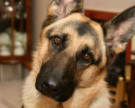 VIRAL! Câinele acesta cerșește mâncare în cel mai adorabil mod posibil! Sigur o să te îndrăgostești de el!