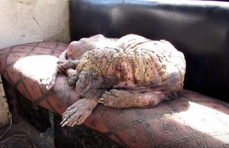 Câinele bolnav arăta de parcă era acoperit cu piatră, dar transformarea este surprinzătoare! Cum arată acum animalul