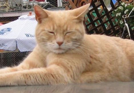 Nu, nu e glumă! O pisică a fost primar al unui oraș, timp de 20 de ani: A câştigat alegerile pentru că oamenii erau nemulţumiţi de candidați! Acum, veteranul Stubbs, a murit